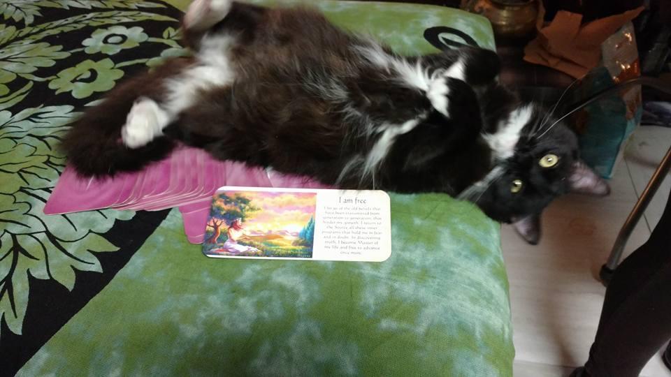 Nirvana Magikal Door Kitten